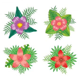 Insieme di piante tropicali di foglie e fiori