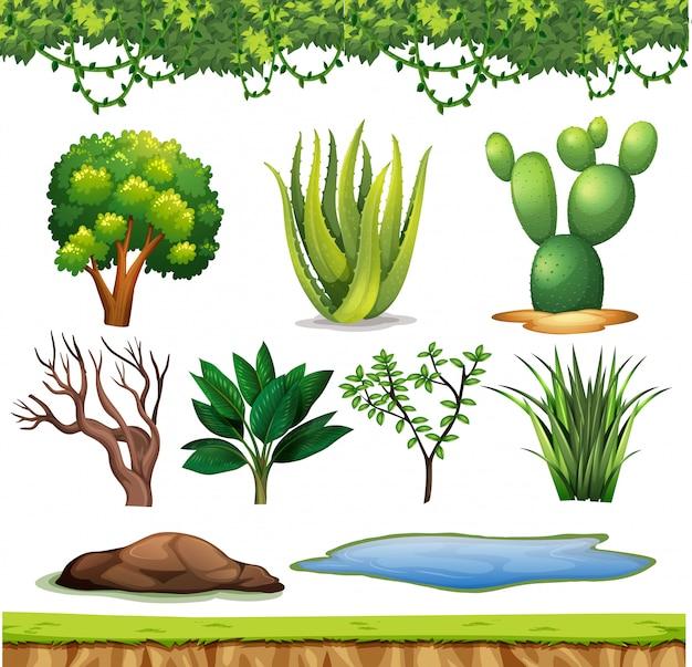 Insieme di piccole piante senza fiori su bianco