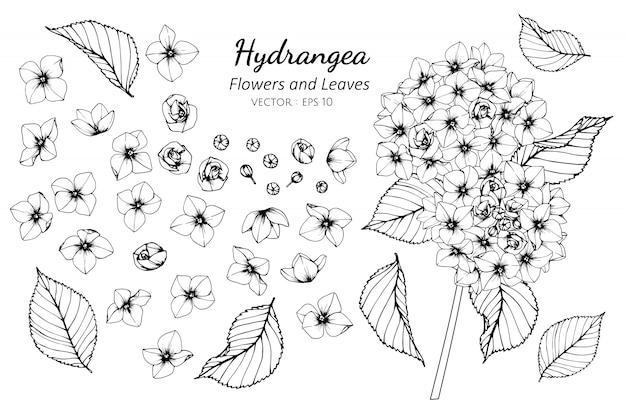 Insieme di raccolta di fiori e foglie di ortensia