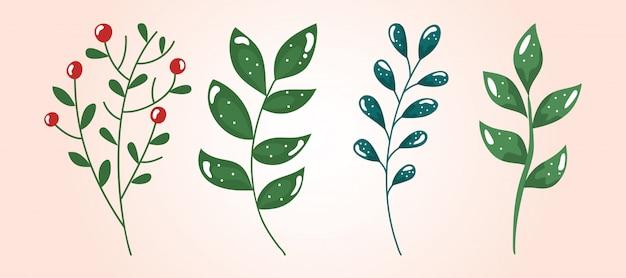 Insieme di rami con foglie e semi