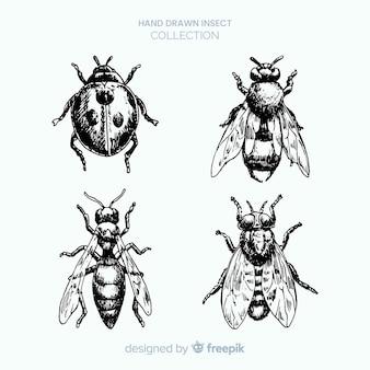 Insieme di schizzo di insetti disegnati a mano realistico