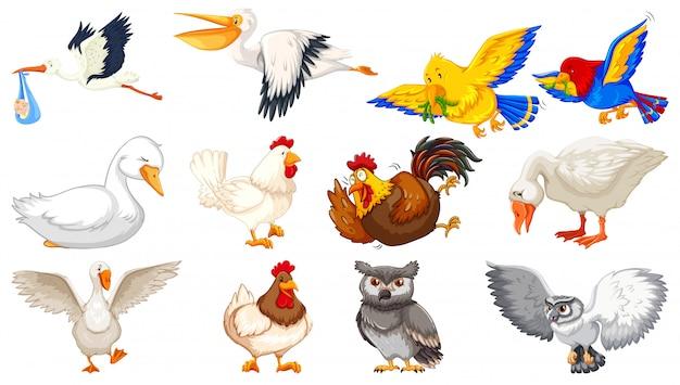 Insieme di stile differente del fumetto degli uccelli isolato su fondo bianco