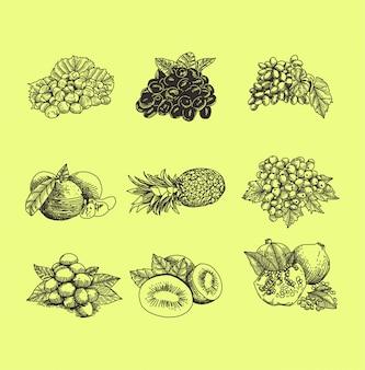 Insieme di stile disegnato a mano dell'illustrazione di frutti