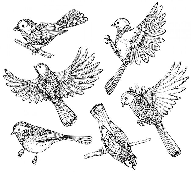 Insieme di uccelli ornati disegnati a mano.