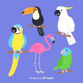 Insieme di uccelli selvatici: tucano, pappagallo, fenicottero