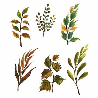 Insieme di vari elementi di foglie dell'acquerello