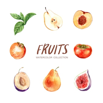 Insieme di vari frutti dell'acquerello isolato