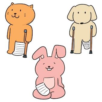 Insieme di vettore del cast ortopedico di uso animale