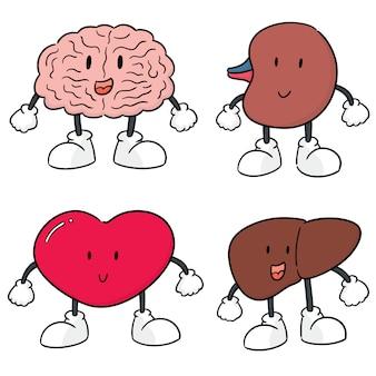 Insieme di vettore del fumetto di organo interno
