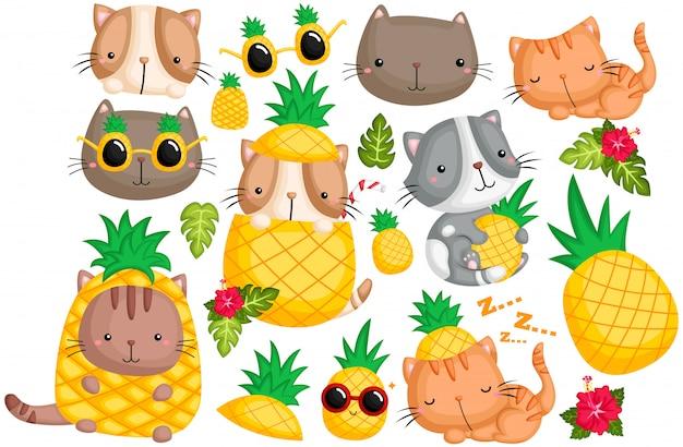 Insieme di vettore del gatto dell'ananas