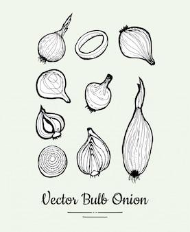 Insieme di vettore della lampadina della cipolla. illustrazione disegnata a mano di cibo vegetariano linea.