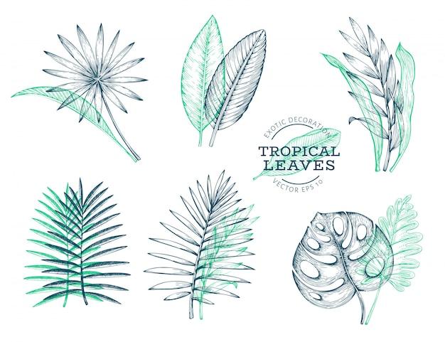 Insieme di vettore delle foglie tropicali.