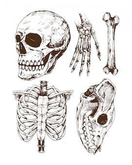 Insieme di vettore di doodle del cranio