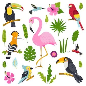 Insieme di vettore di uccelli carini dalla giungla