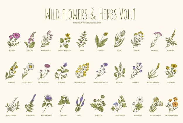Insieme disegnato a mano delle erbe e dei fiori selvaggi