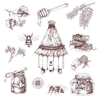 Insieme disegnato a mano di elementi di miele