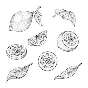 Insieme disegnato a mano di foglie e frutti di limone.