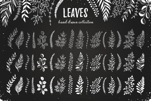 Insieme disegnato a mano di foglie