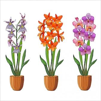 Insieme disegnato a mano di orchidee in vasi da fiori.