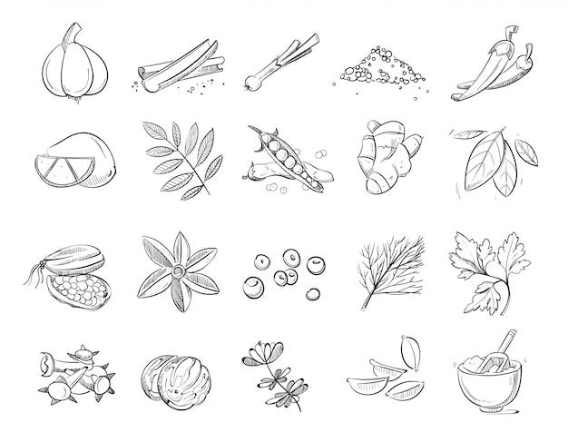 Insieme disegnato a mano di vettore di spezie ed erbe di scarabocchio