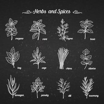 Insieme disegnato a mano erbe e spezie