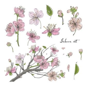 Insieme disegnato a mano realistico di sakura con germogli, fiori, foglie, ramo. illustrazione colorata stile vintage.