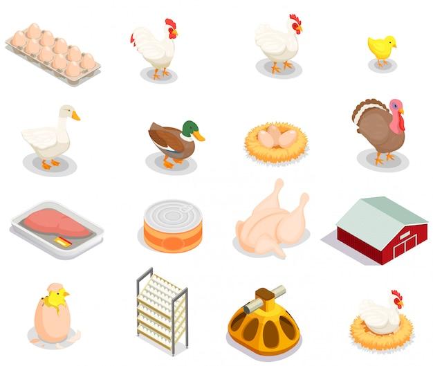 Insieme isometrico di produzione di pollame dei prodotti gastronomici delle uova delle merci in scatola dell'alimentatore dell'uccello della gallina della nidiata isolato