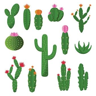 Insieme piano dell'illustrazione di progettazione della pianta sveglia dei cactus cactus