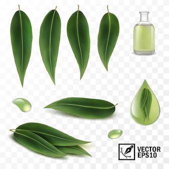 Insieme realistico 3d di elementi, foglie di eucalipto e gocce di rugiada o olio