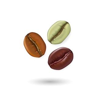 Insieme realistico dei chicchi di caffè che mostra le varie fasi di tostatura isolate sull'illustrazione bianca del fondo