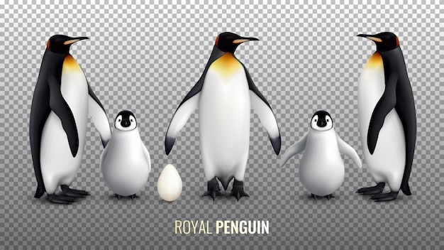 Insieme realistico del pinguino reale con con il pulcino dell'uovo e gli uccelli adulti su trasparente