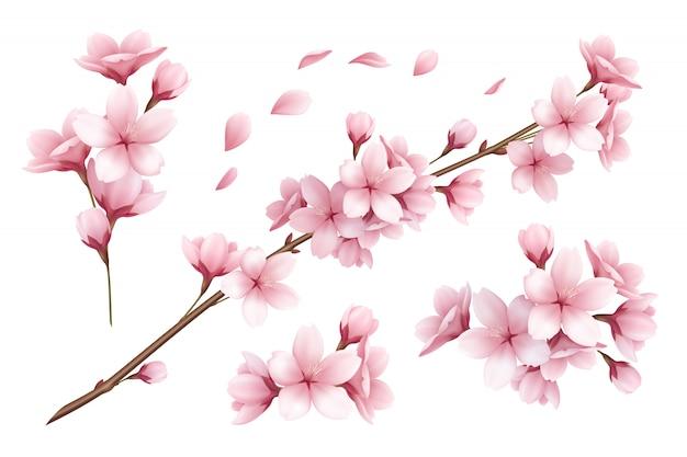 Insieme realistico di bella illustrazione dei fiori e dei petali dei rami di sakura