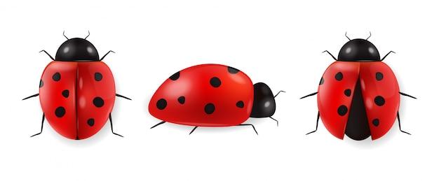 Insieme realistico isolato, ciao primavera, insetto rosso della coccinella