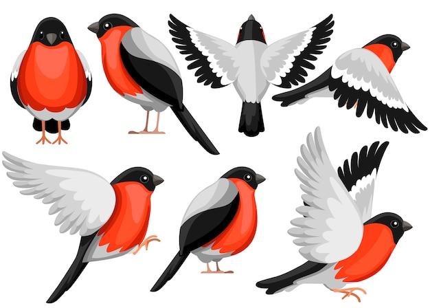 Insieme variopinto dell'icona dell'uccello del ciuffolotto. carattere . icona dell'uccello in un lato diverso della vista. uccello invernale. illustrazione su sfondo bianco.