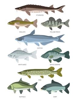 Insieme vettoriale di diversi tipi di pesci d'acqua dolce