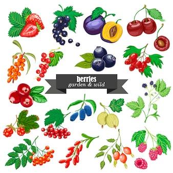 Insieme vettoriale di giardino e frutti di bosco