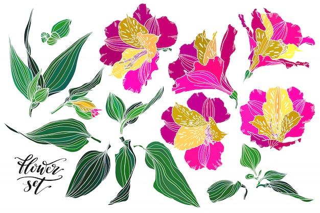 Insieme vettoriale di piante disegnate a mano come elementi di design.