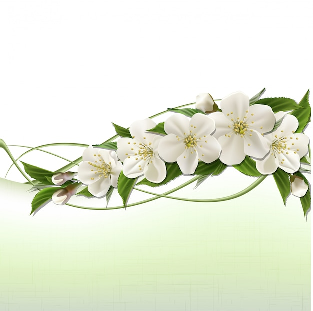 Intestazione di primavera con fiori di ciliegio bianchi, boccioli e copia spazio