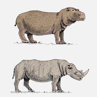 Ippopotamo e rinoceronte bianco o nero disegnati a mano, incisi animali selvatici in stile vintage o retrò, set di zoologia africana