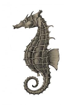 Isolato d'annata dell'illustrazione dell'incisione del disegno della mano del cavalluccio marino su fondo bianco