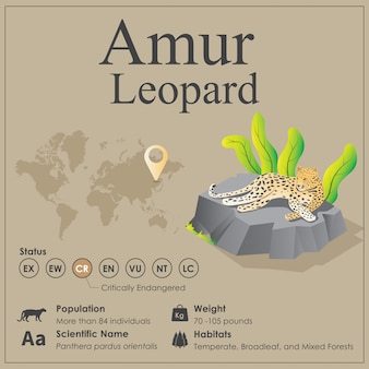 Isometrico amur leopard infographic
