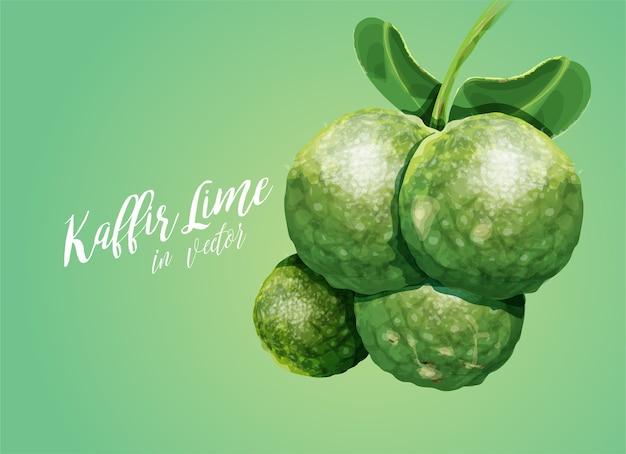 Kaffir limes vector art