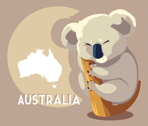 Koala sveglia con la mappa dell'australia