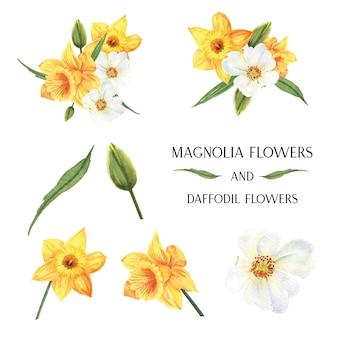 L'acquerello botanico dei fiori dei mazzi della magnolia e del narciso gialli fiorisce l'acquerello