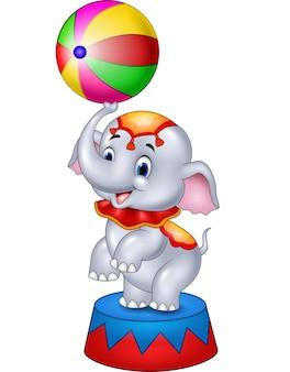 L'elefante sveglio del circo con una sfera a strisce si leva in piedi su un podio