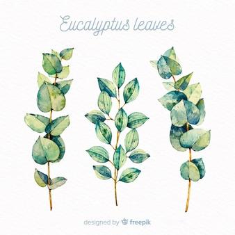 L'eucalyptus dell'acquerello lascia la priorità bassa
