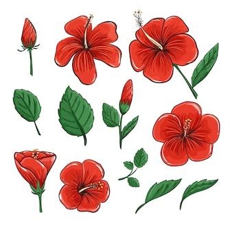 L'ibisco rosso del fiore tropicale fiorisce e foglie nell'arte realistica di progettazione del disegno di vettore.