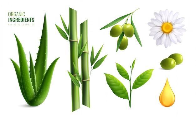 L'icona organica realistica colorata degli ingredienti dei cosmetici ha messo con l'illustrazione di bambù di vettore della camomilla dell'olio di oliva dell'aloe