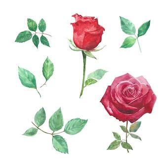 L'insieme dell'acquerello è aumentato, illustrazione disegnata a mano di bianco isolato elementi.