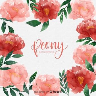 La bella peonia fiorisce la priorità bassa